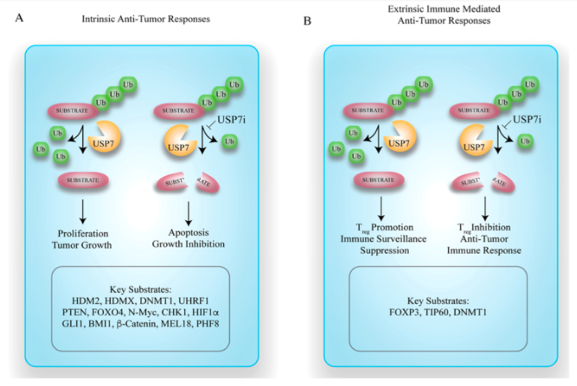 Rasio Intrinsic and Extrinsic Anti-Tumor responses