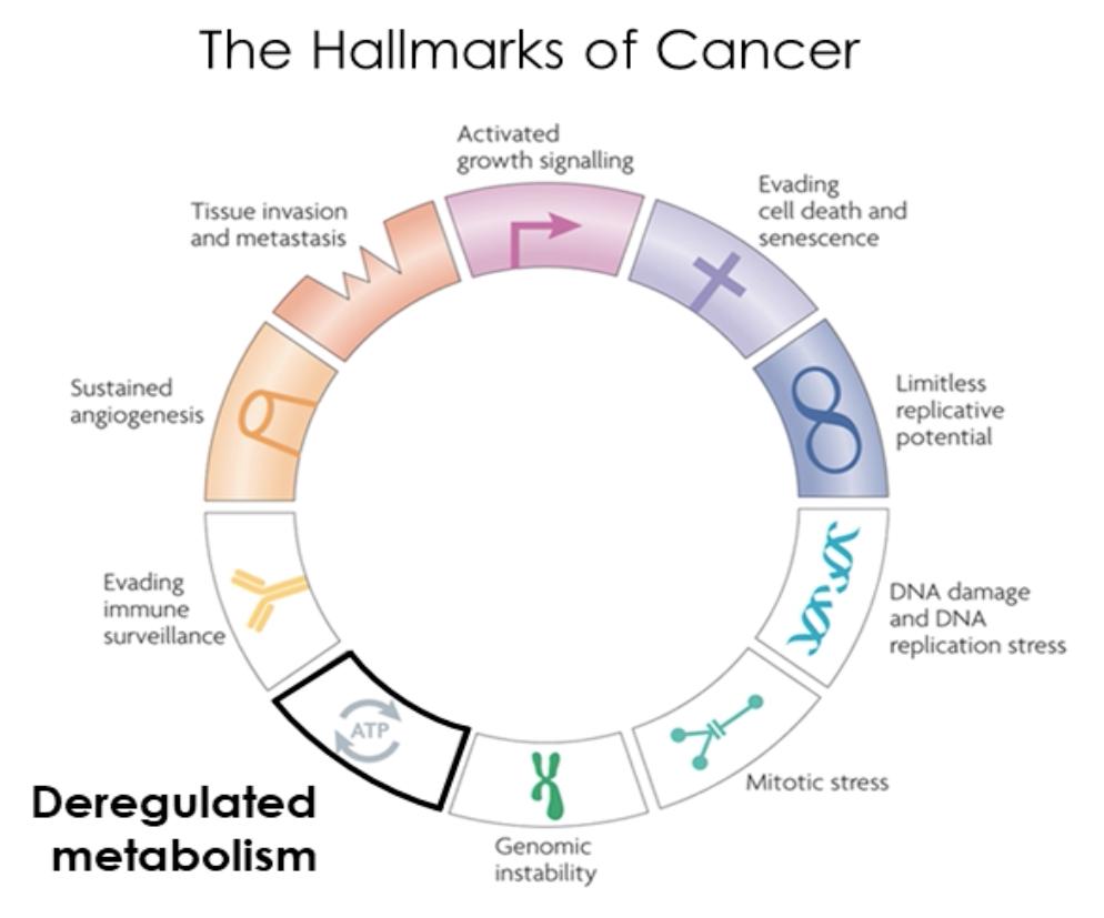 Cellular Hallmarks